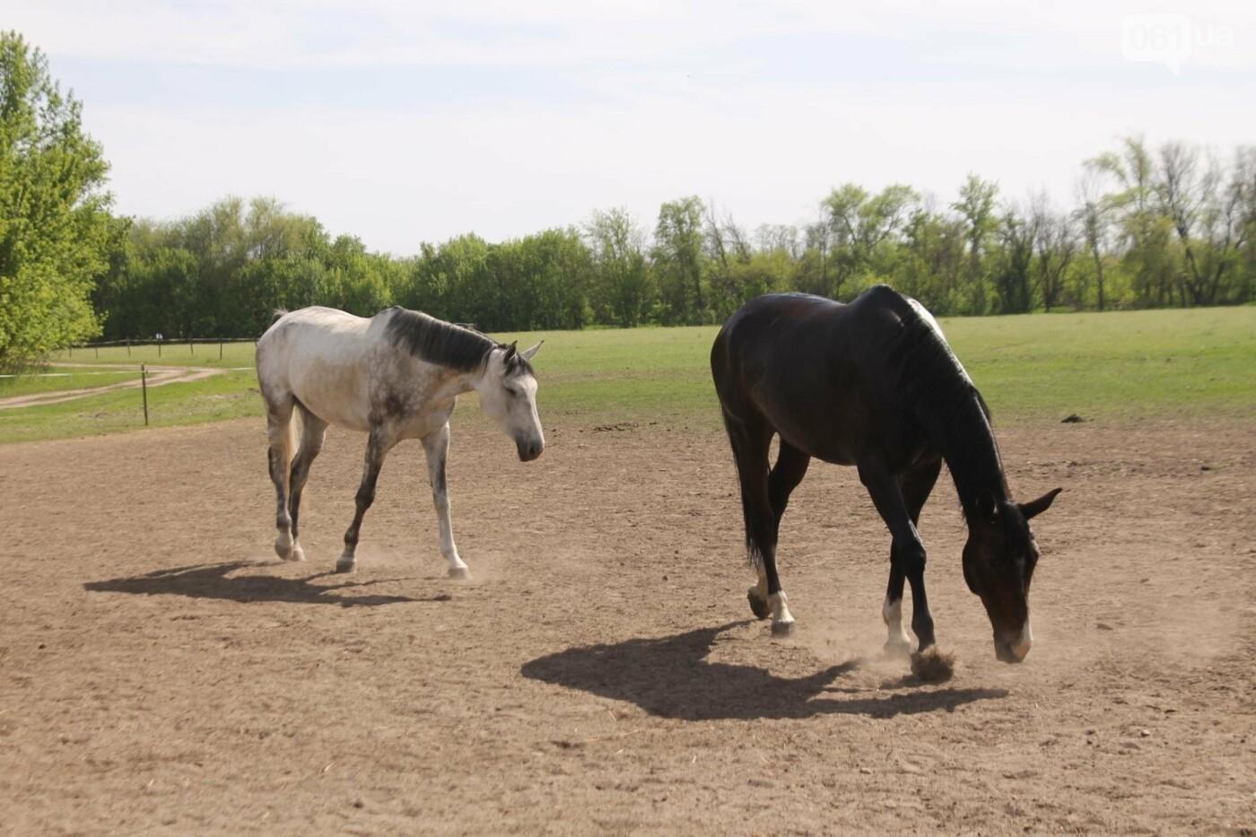 Незабываемое общение с лошадьми: экскурсия в конноспортивный клуб «Патриот», – ФОТОРЕПОРТАЖ, фото-12