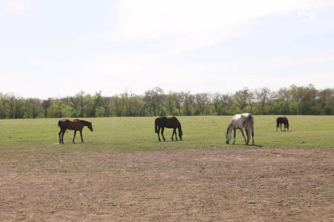 Незабываемое общение с лошадьми: экскурсия в конноспортивный клуб «Патриот», – ФОТОРЕПОРТАЖ, фото-11