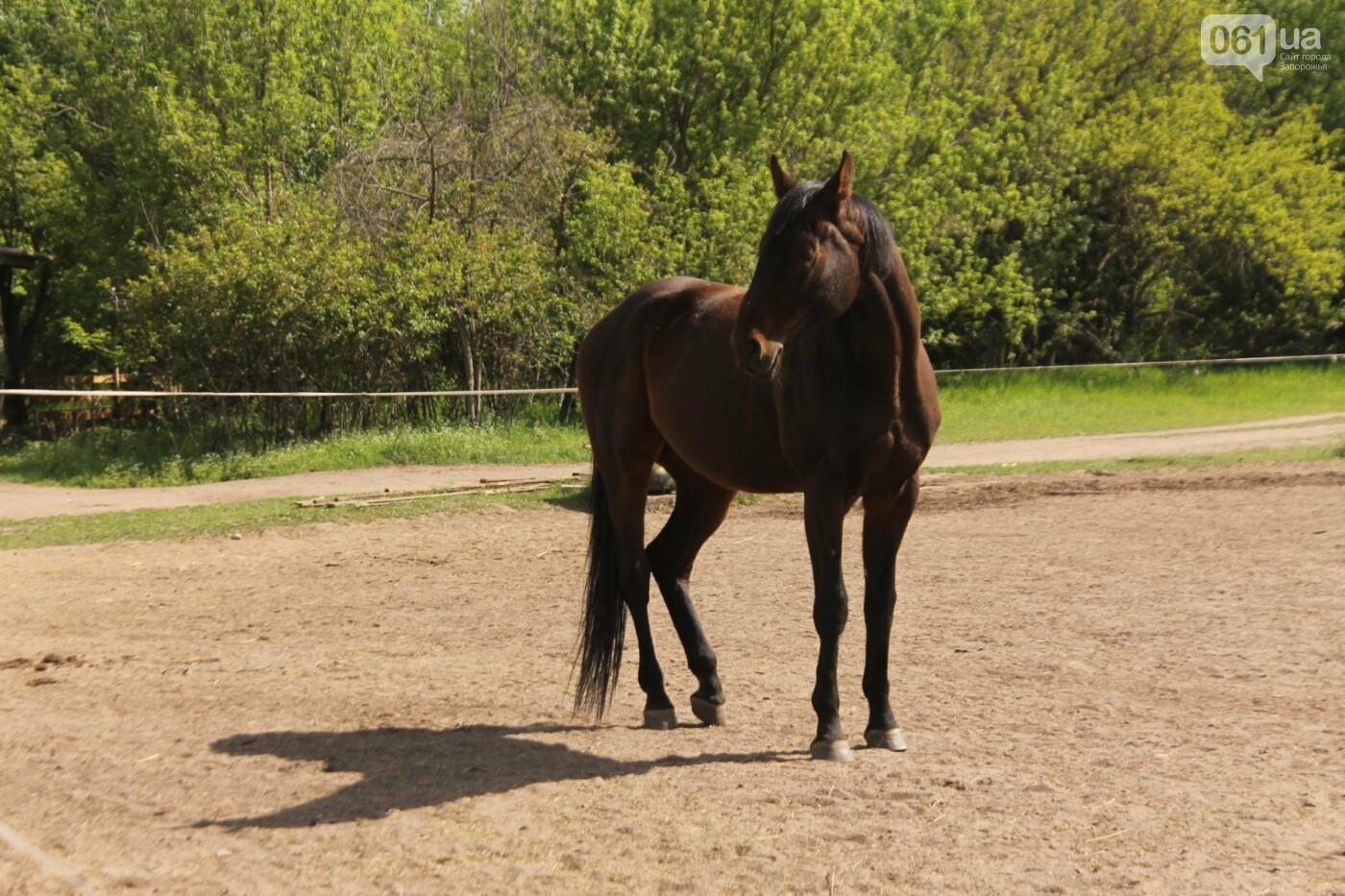 Незабываемое общение с лошадьми: экскурсия в конноспортивный клуб «Патриот», – ФОТОРЕПОРТАЖ, фото-13