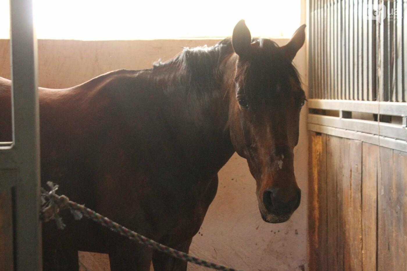 Незабываемое общение с лошадьми: экскурсия в конноспортивный клуб «Патриот», – ФОТОРЕПОРТАЖ, фото-5