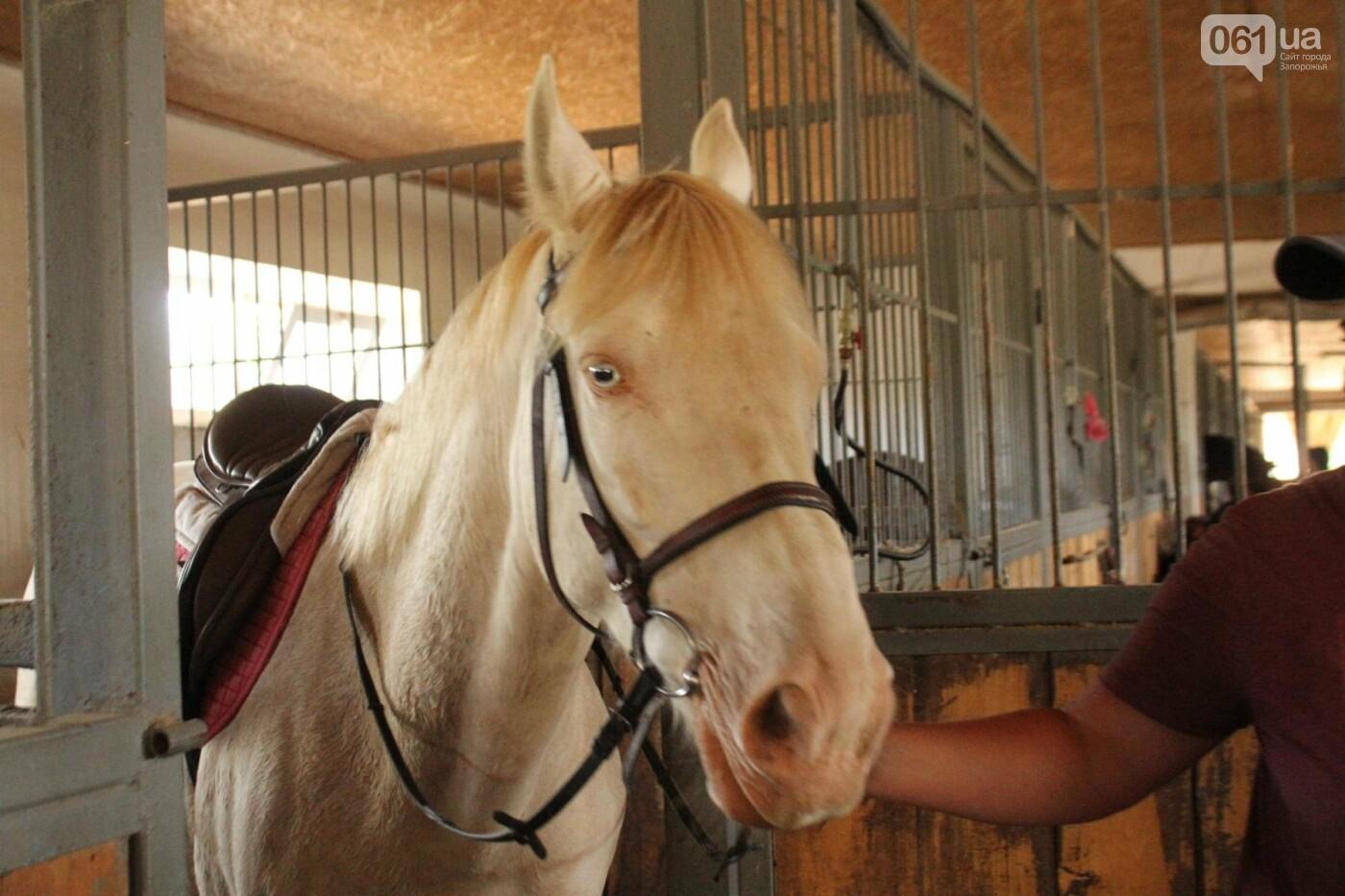 Незабываемое общение с лошадьми: экскурсия в конноспортивный клуб «Патриот», – ФОТОРЕПОРТАЖ, фото-3