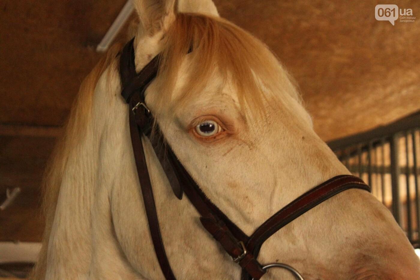 Незабываемое общение с лошадьми: экскурсия в конноспортивный клуб «Патриот», – ФОТОРЕПОРТАЖ, фото-4