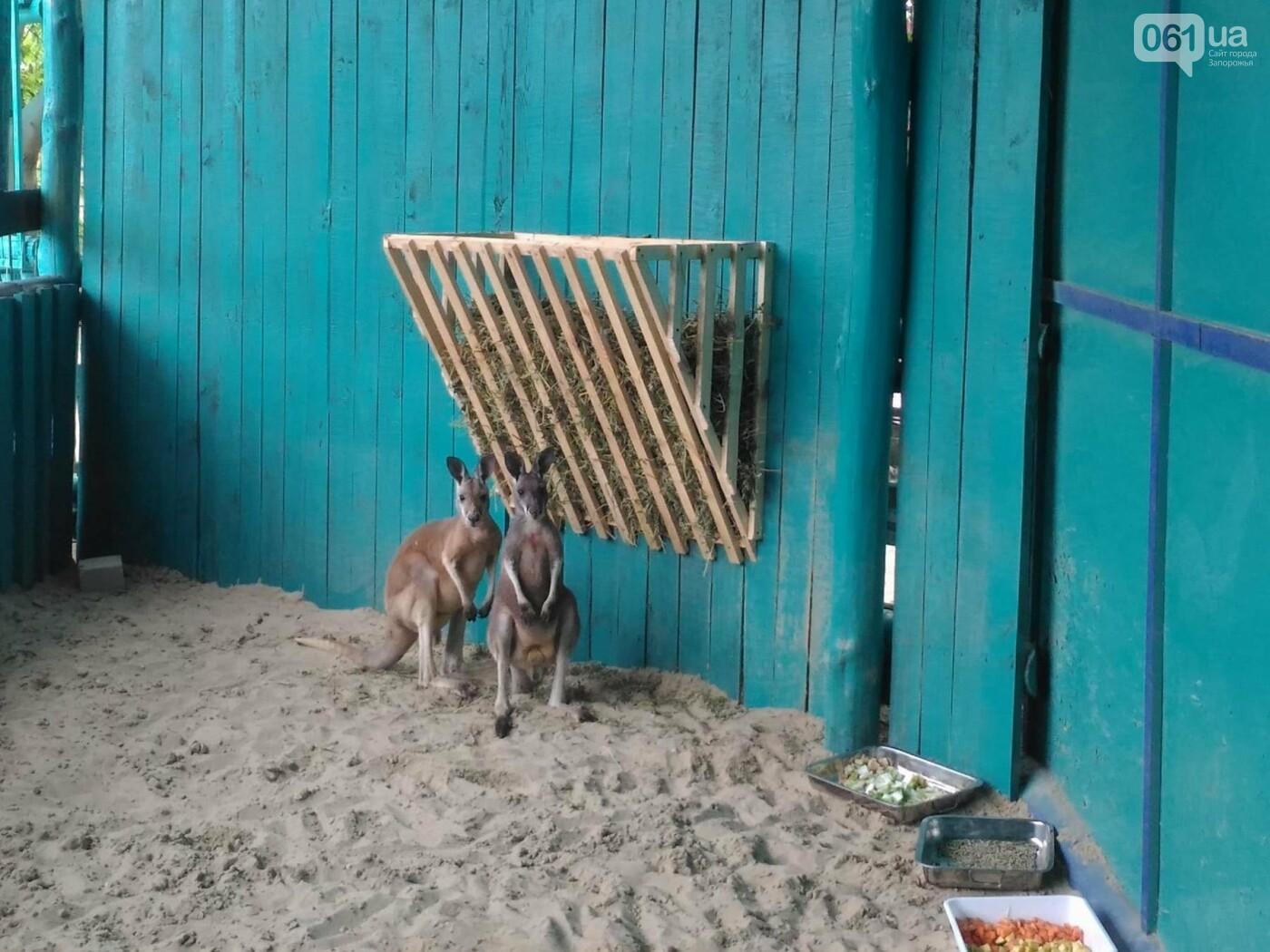 В бердянском зоопарке появились кенгуру, - ФОТО, ВИДЕО, фото-3