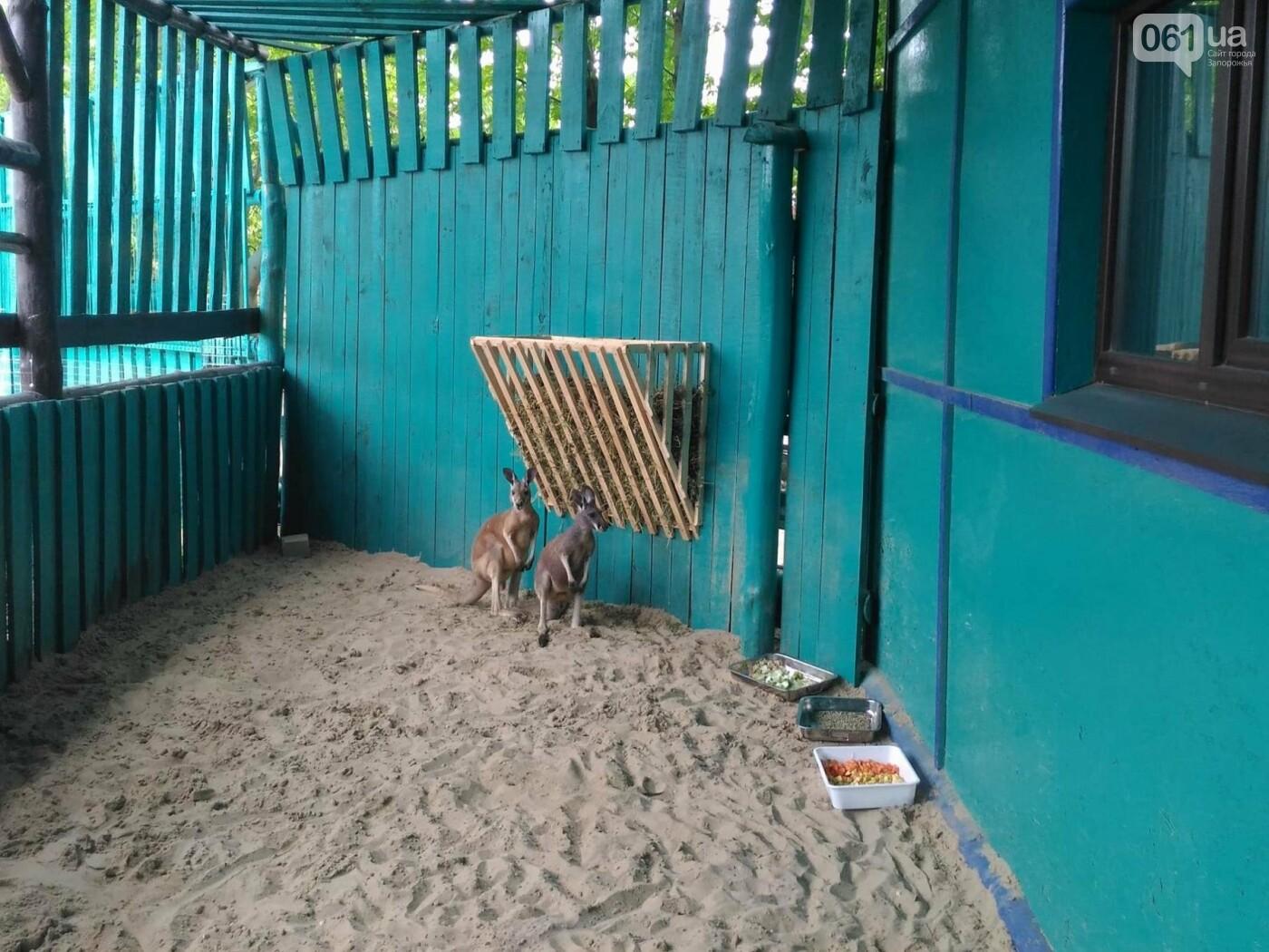 В бердянском зоопарке появились кенгуру, - ФОТО, ВИДЕО, фото-2