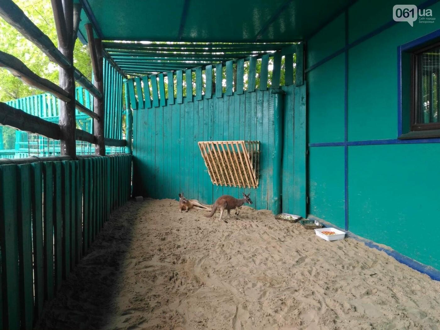 В бердянском зоопарке появились кенгуру, - ФОТО, ВИДЕО, фото-1