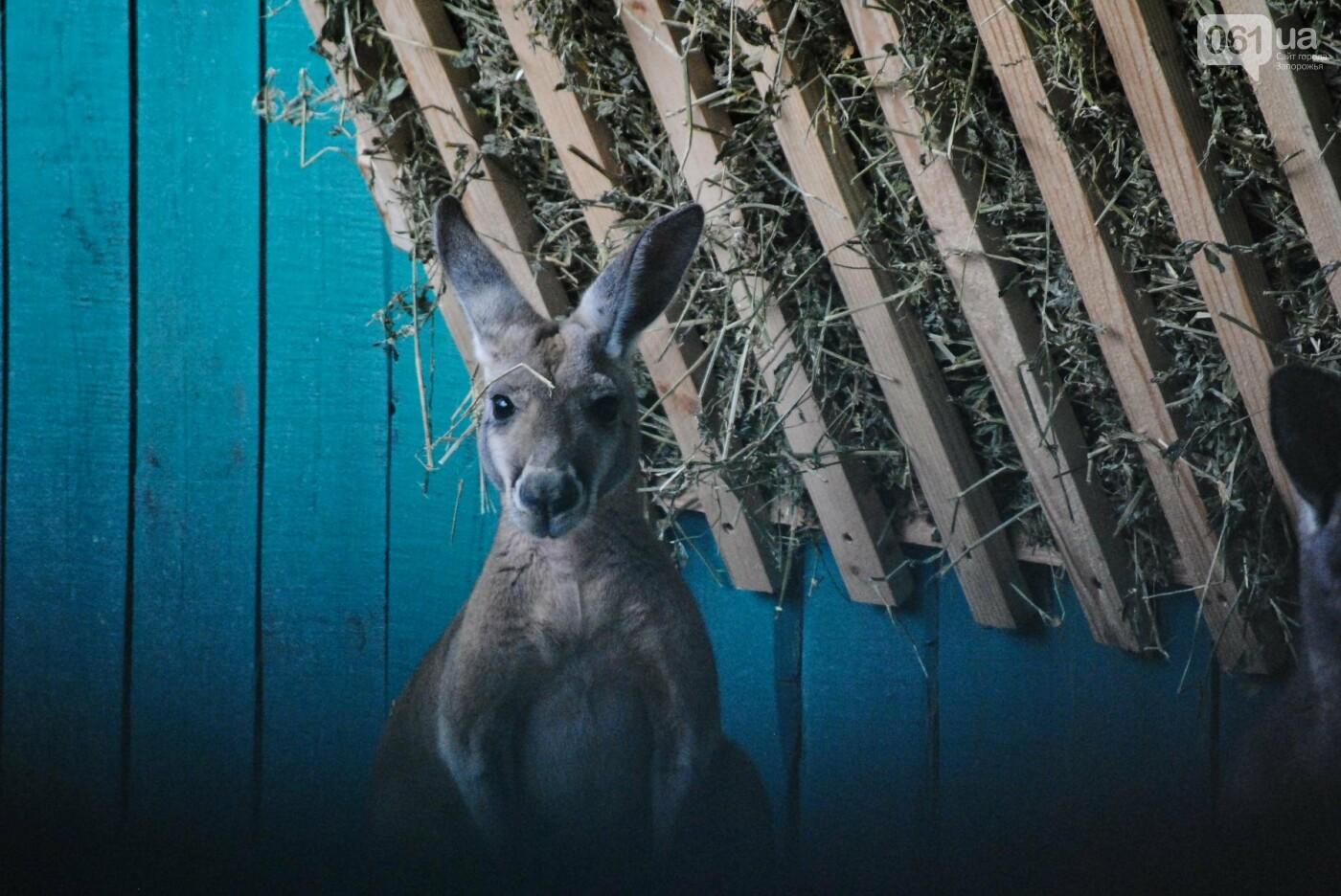 В бердянском зоопарке появились кенгуру: они любят хлеб и скоро станут ручными, - ФОТОРЕПОРТАЖ, фото-7