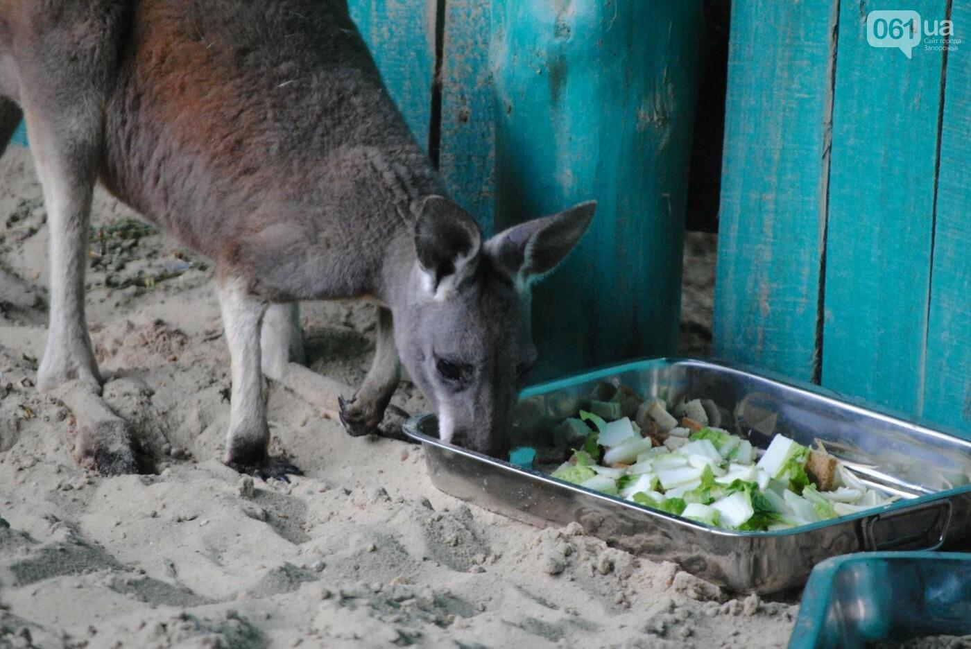 В бердянском зоопарке появились кенгуру: они любят хлеб и скоро станут ручными, - ФОТОРЕПОРТАЖ, фото-13
