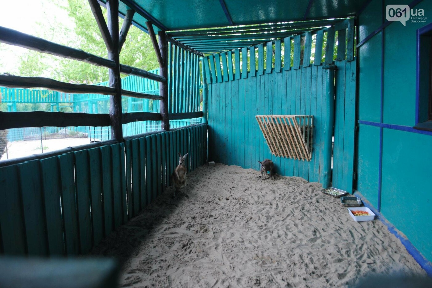 В бердянском зоопарке появились кенгуру: они любят хлеб и скоро станут ручными, - ФОТОРЕПОРТАЖ, фото-15