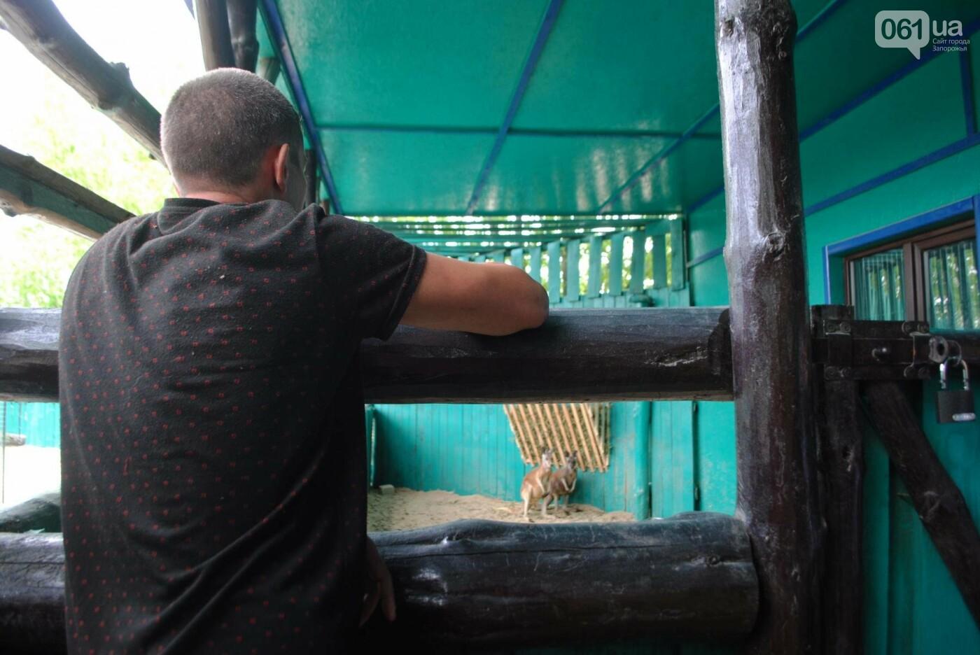 В бердянском зоопарке появились кенгуру: они любят хлеб и скоро станут ручными, - ФОТОРЕПОРТАЖ, фото-12