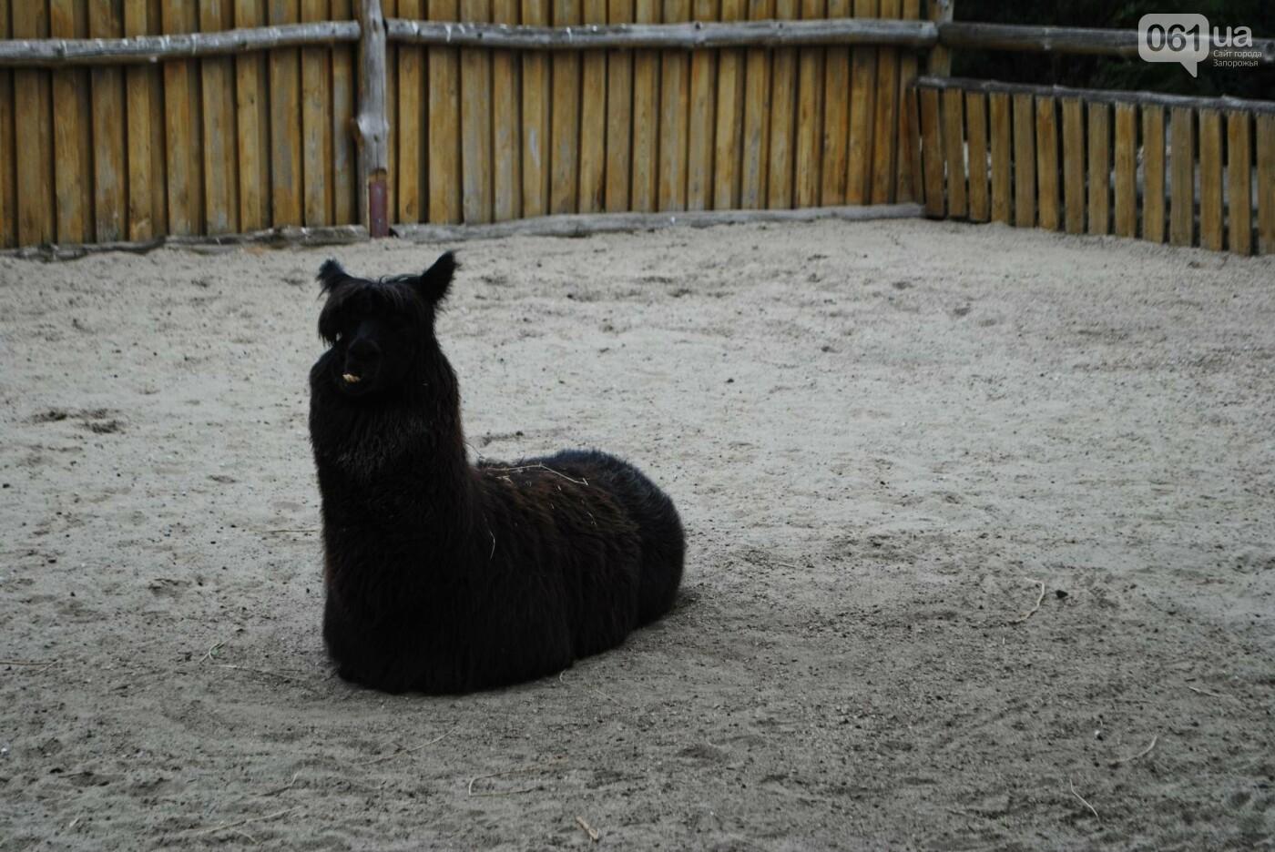 В бердянском зоопарке появились кенгуру: они любят хлеб и скоро станут ручными, - ФОТОРЕПОРТАЖ, фото-19