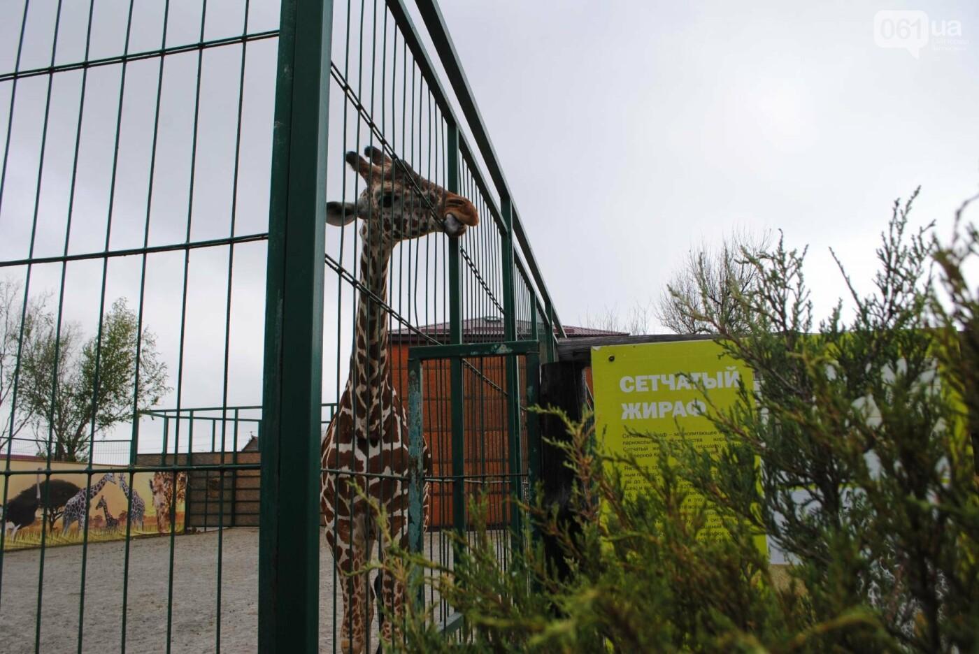 В бердянском зоопарке появились кенгуру: они любят хлеб и скоро станут ручными, - ФОТОРЕПОРТАЖ, фото-16