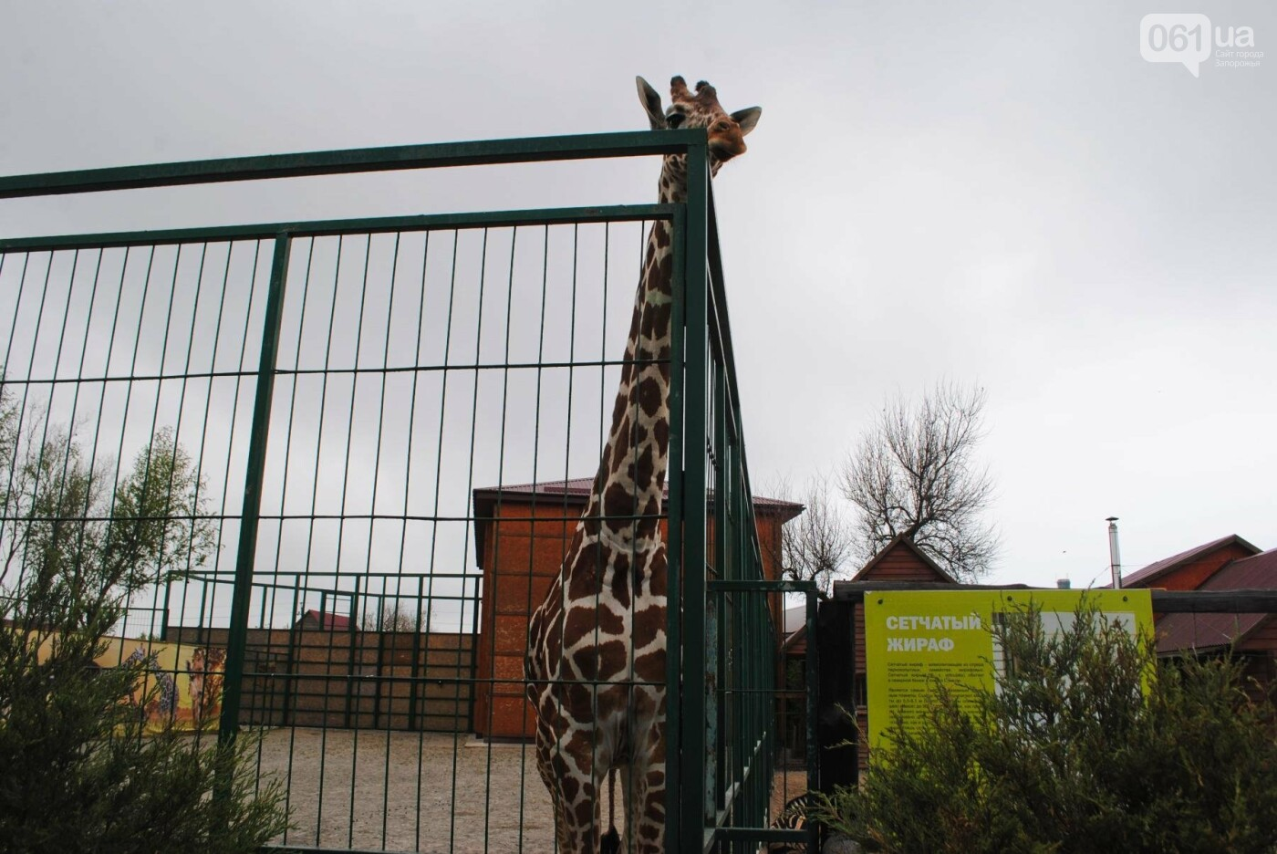В бердянском зоопарке появились кенгуру: они любят хлеб и скоро станут ручными, - ФОТОРЕПОРТАЖ, фото-25