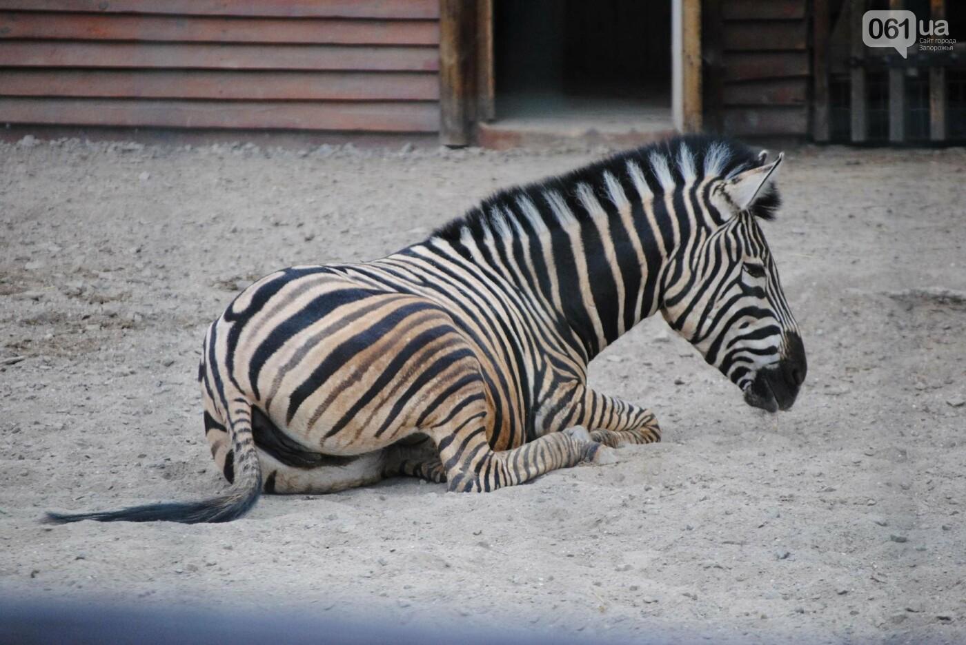 В бердянском зоопарке появились кенгуру: они любят хлеб и скоро станут ручными, - ФОТОРЕПОРТАЖ, фото-31