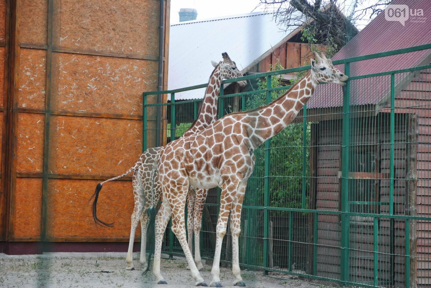 В бердянском зоопарке появились кенгуру: они любят хлеб и скоро станут ручными, - ФОТОРЕПОРТАЖ, фото-29