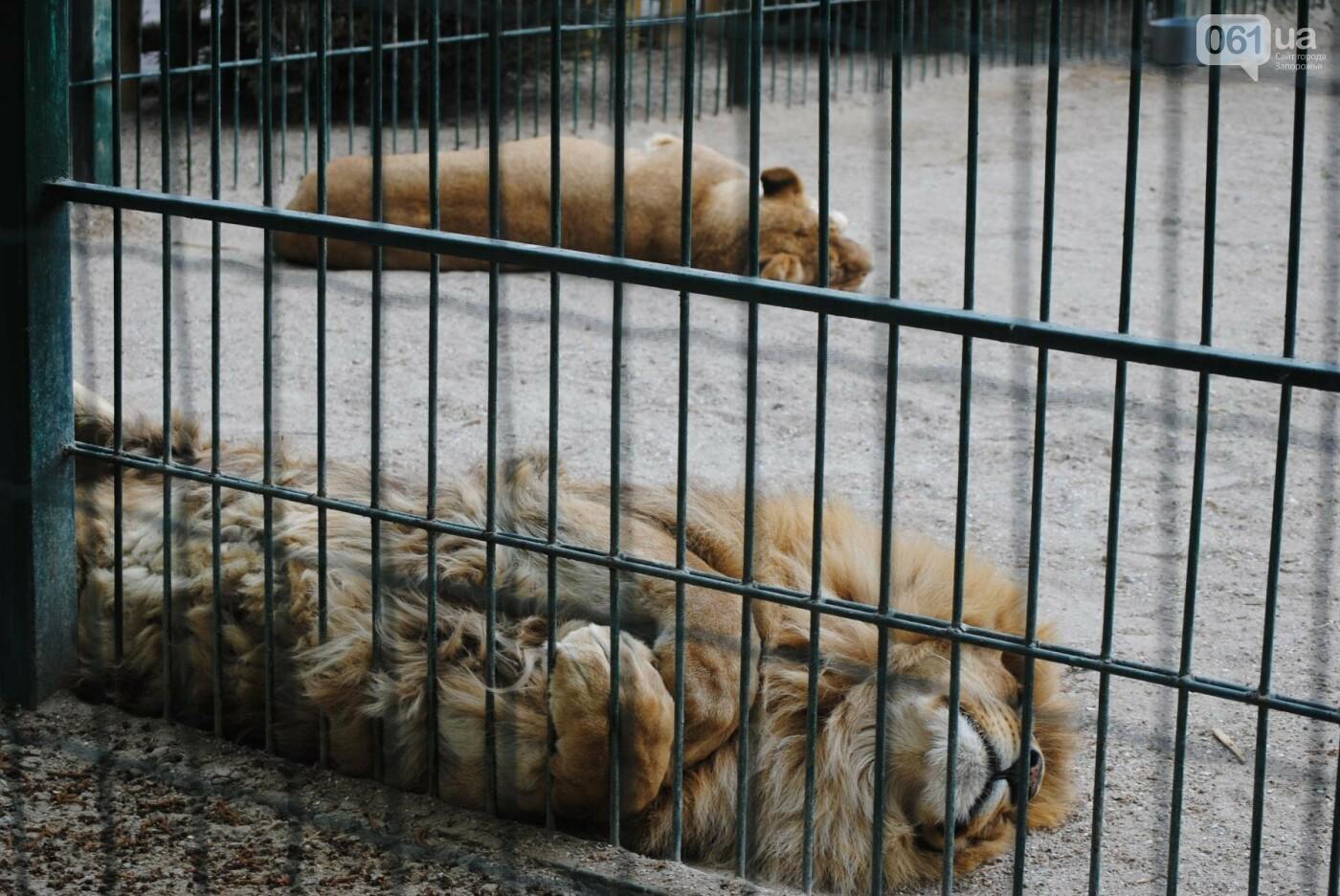 В бердянском зоопарке появились кенгуру: они любят хлеб и скоро станут ручными, - ФОТОРЕПОРТАЖ, фото-30