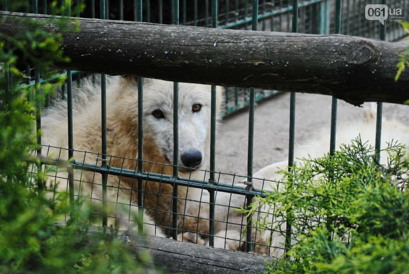 В бердянском зоопарке появились кенгуру: они любят хлеб и скоро станут ручными, - ФОТОРЕПОРТАЖ, фото-21