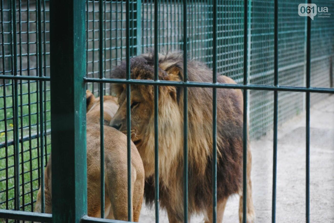 В бердянском зоопарке появились кенгуру: они любят хлеб и скоро станут ручными, - ФОТОРЕПОРТАЖ, фото-26