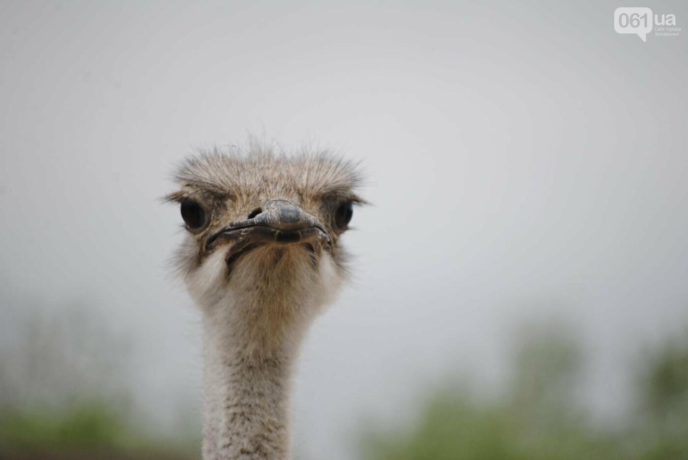 В бердянском зоопарке появились кенгуру: они любят хлеб и скоро станут ручными, - ФОТОРЕПОРТАЖ, фото-18