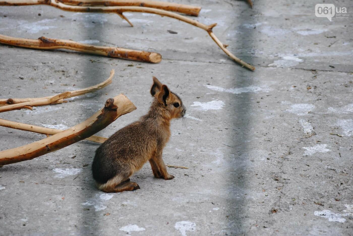 В бердянском зоопарке появились кенгуру: они любят хлеб и скоро станут ручными, - ФОТОРЕПОРТАЖ, фото-22