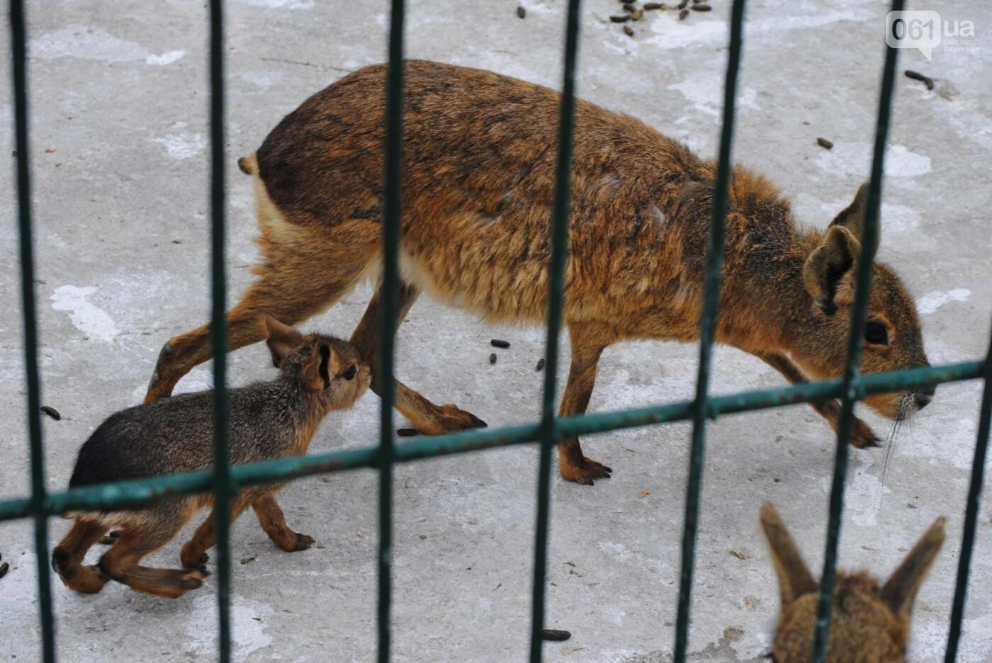 В бердянском зоопарке появились кенгуру: они любят хлеб и скоро станут ручными, - ФОТОРЕПОРТАЖ, фото-23