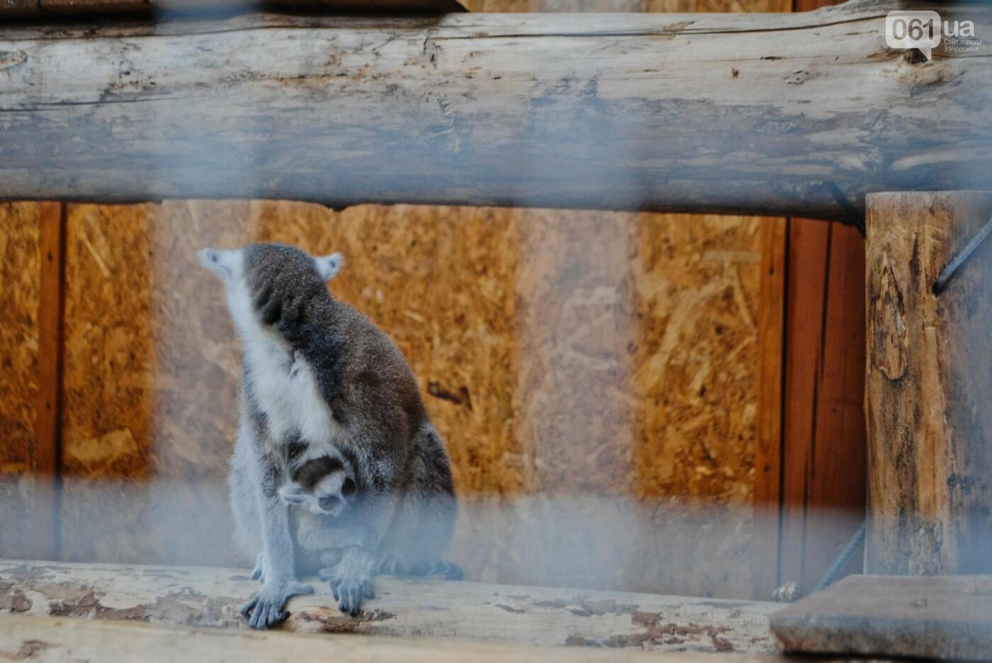 В бердянском зоопарке появились кенгуру: они любят хлеб и скоро станут ручными, - ФОТОРЕПОРТАЖ, фото-20