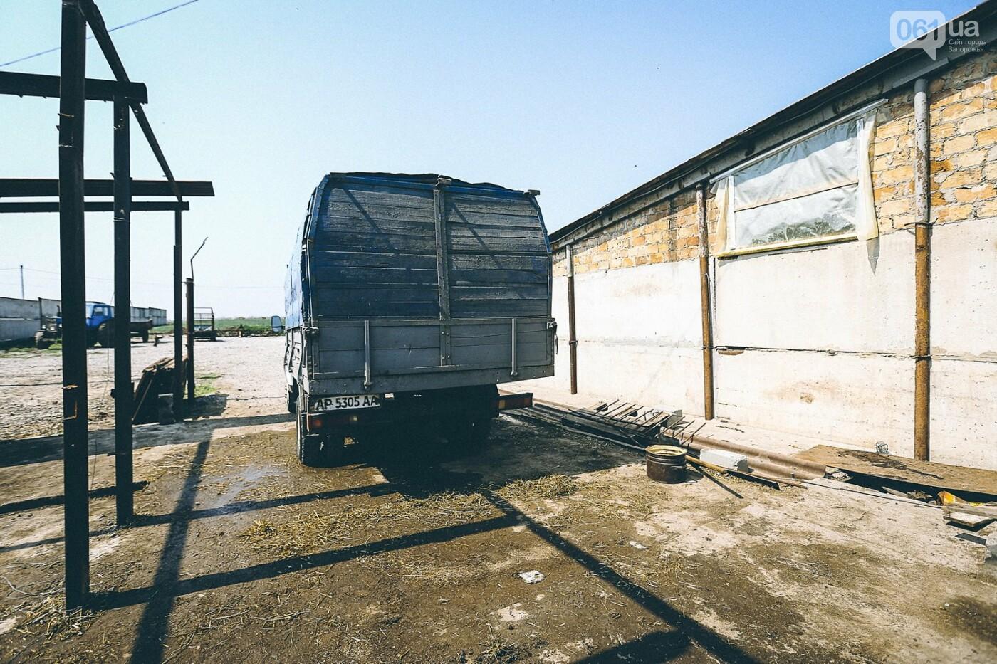 Забой скота в Украине приходит к европейским стандартам - ФОТОРЕПОРТАЖ 18+, фото-1