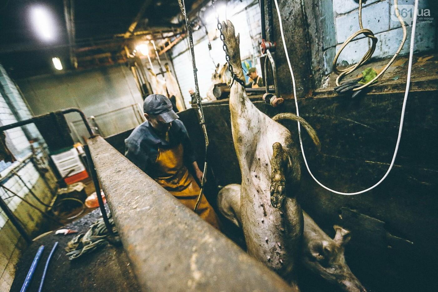Забой скота в Украине приходит к европейским стандартам - ФОТОРЕПОРТАЖ 18+, фото-6