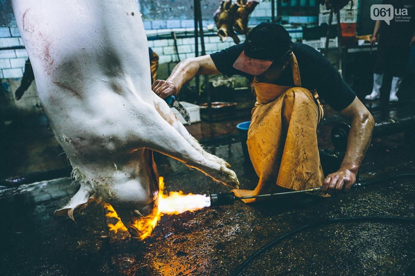 Забой скота в Украине приходит к европейским стандартам - ФОТОРЕПОРТАЖ 18+, фото-9