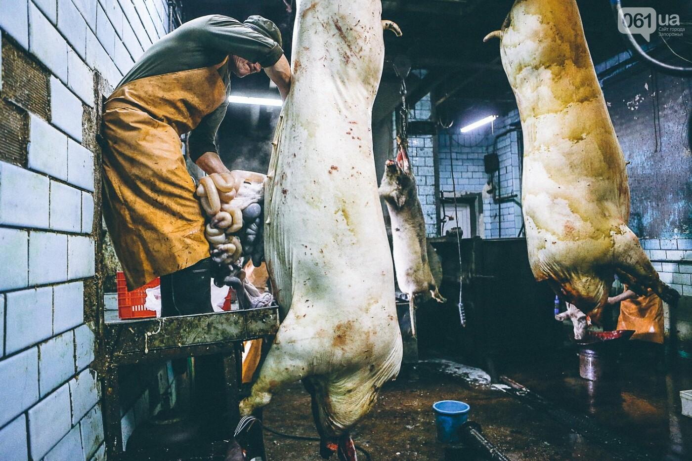 Забой скота в Украине приходит к европейским стандартам - ФОТОРЕПОРТАЖ 18+, фото-11