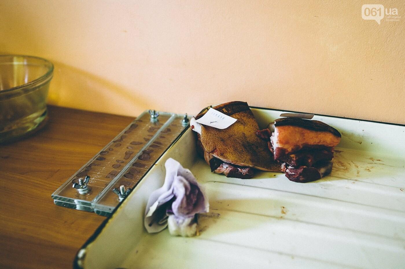 Забой скота в Украине приходит к европейским стандартам - ФОТОРЕПОРТАЖ 18+, фото-17