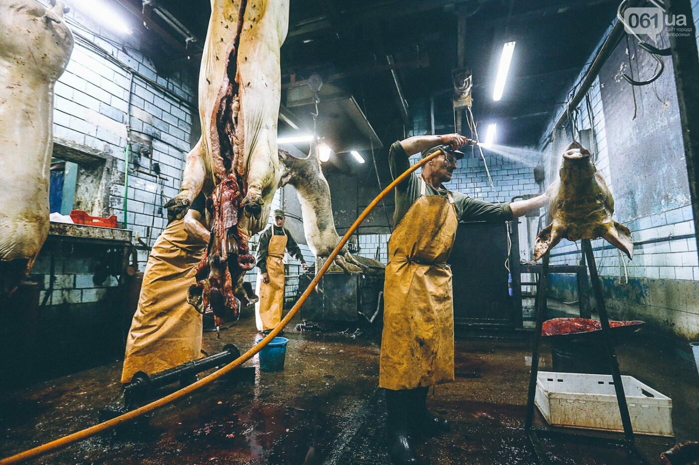 Забой скота в Украине приходит к европейским стандартам - ФОТОРЕПОРТАЖ 18+, фото-15
