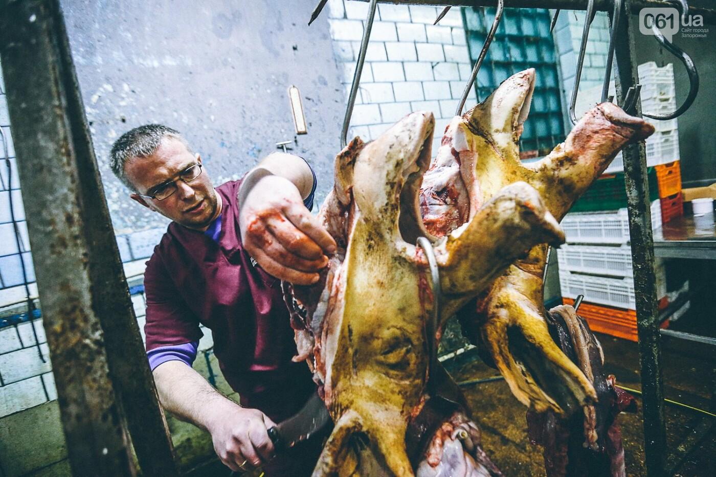 Забой скота в Украине приходит к европейским стандартам - ФОТОРЕПОРТАЖ 18+, фото-16