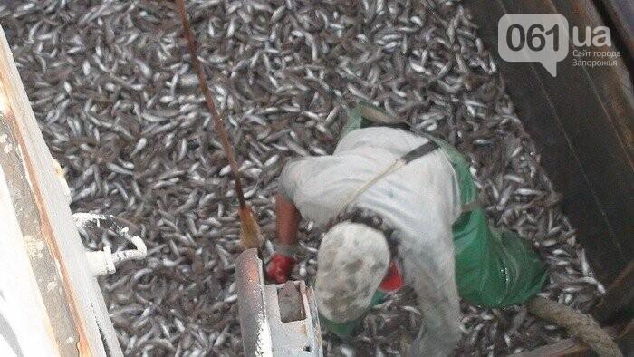 СБУ: в Бердянске под патронатом чиновников браконьеры наловили рыбы на 50 миллионов, - ФОТО, ВИДЕО, фото-2