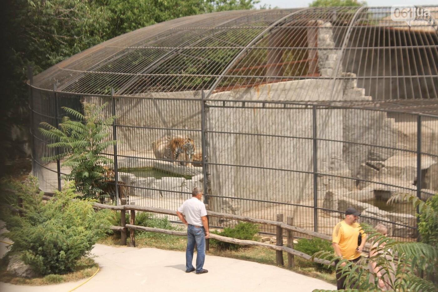 В доме с хищниками: как Александр Пылышенко прожил 36 дней с львицей и построил в Васильевке уникальный зоопарк, фото-2