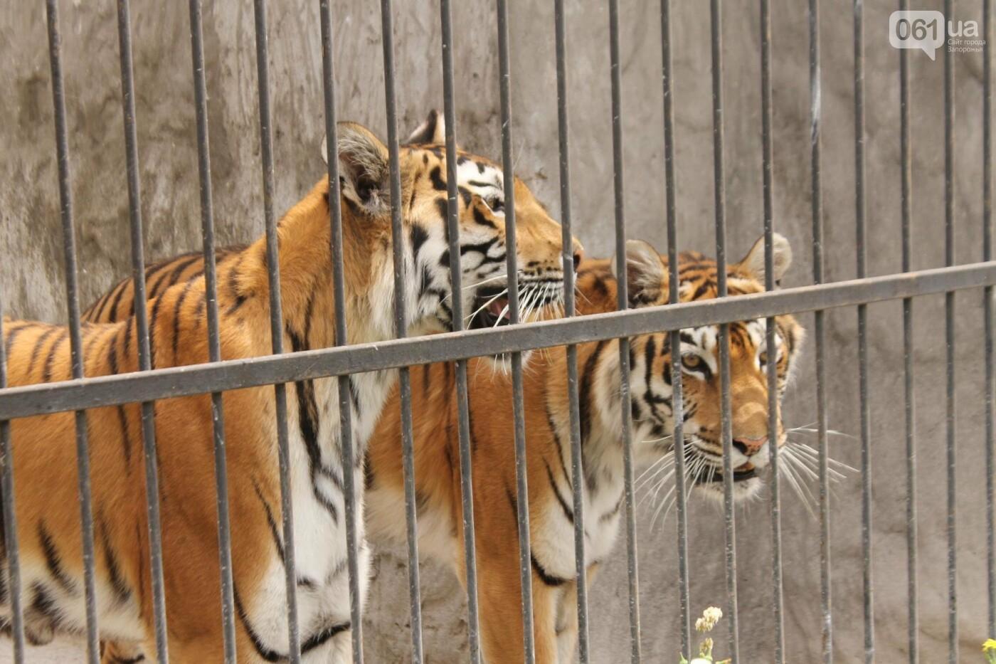 В доме с хищниками: как Александр Пылышенко прожил 36 дней с львицей и построил в Васильевке уникальный зоопарк, фото-25