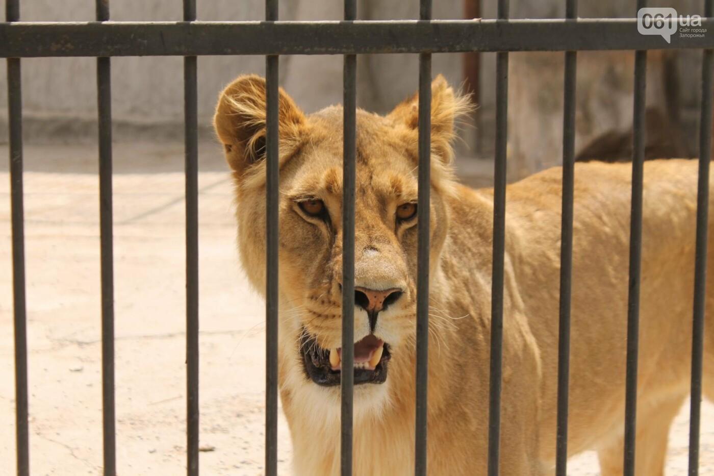 В доме с хищниками: как Александр Пылышенко прожил 36 дней с львицей и построил в Васильевке уникальный зоопарк, фото-14
