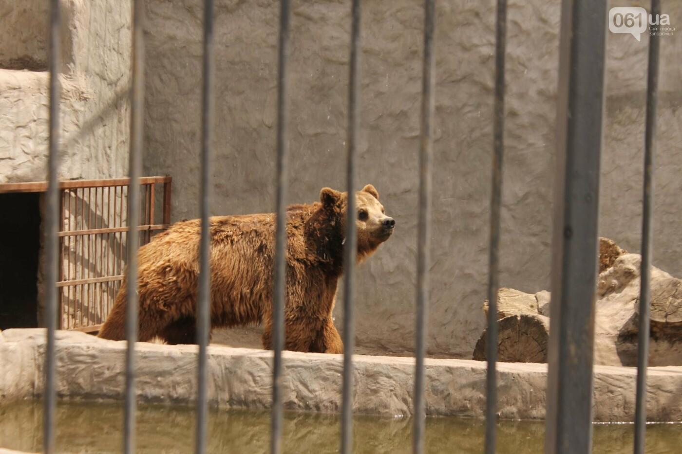 В доме с хищниками: как Александр Пылышенко прожил 36 дней с львицей и построил в Васильевке уникальный зоопарк, фото-21
