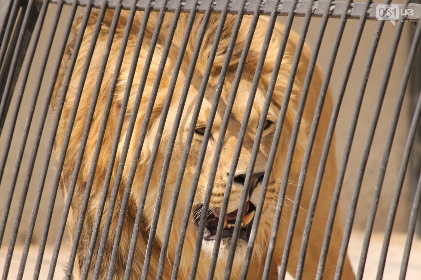 В доме с хищниками: как Александр Пылышенко прожил 36 дней с львицей и построил в Васильевке уникальный зоопарк, фото-26