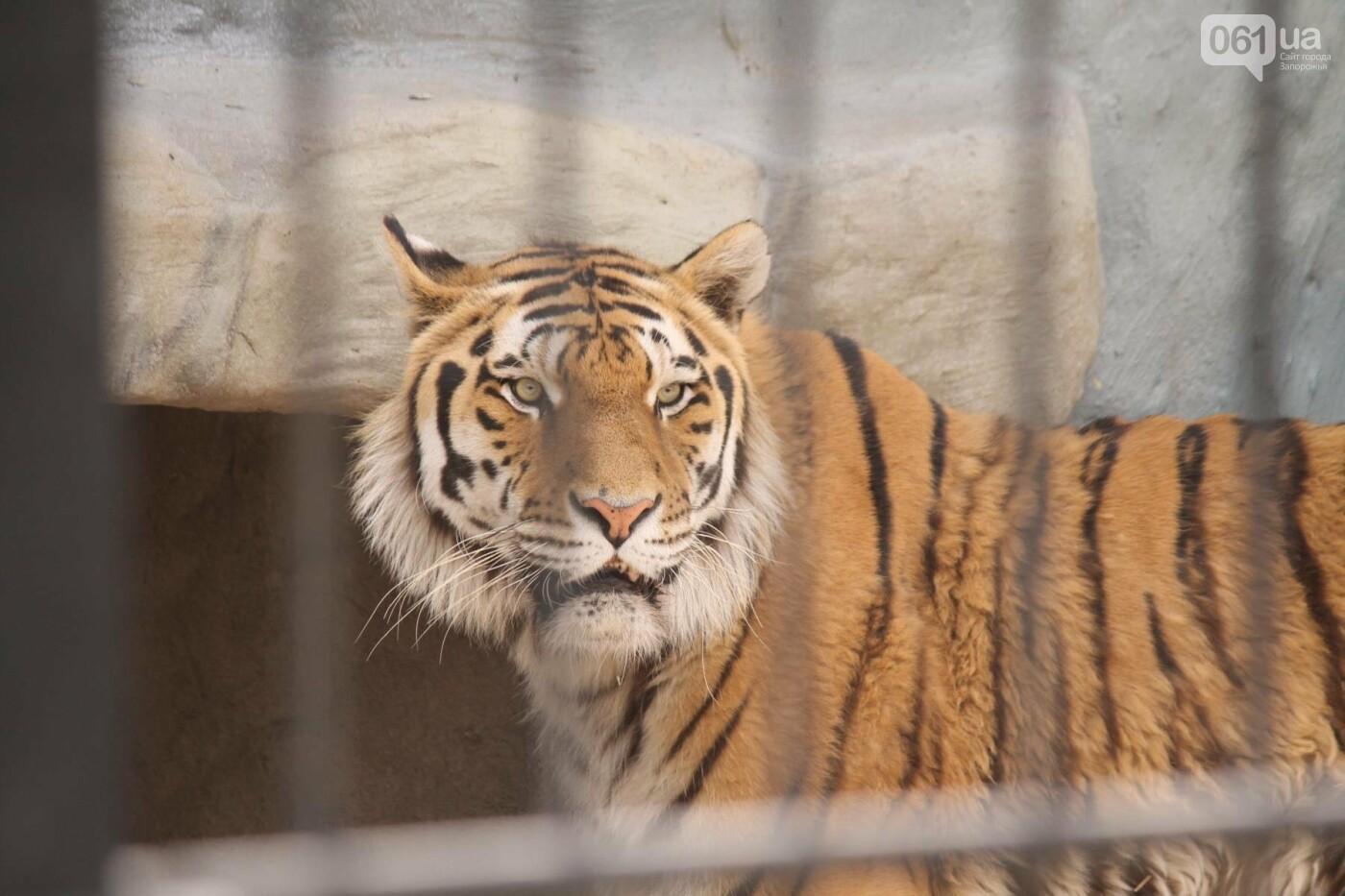 В доме с хищниками: как Александр Пылышенко прожил 36 дней с львицей и построил в Васильевке уникальный зоопарк, фото-18