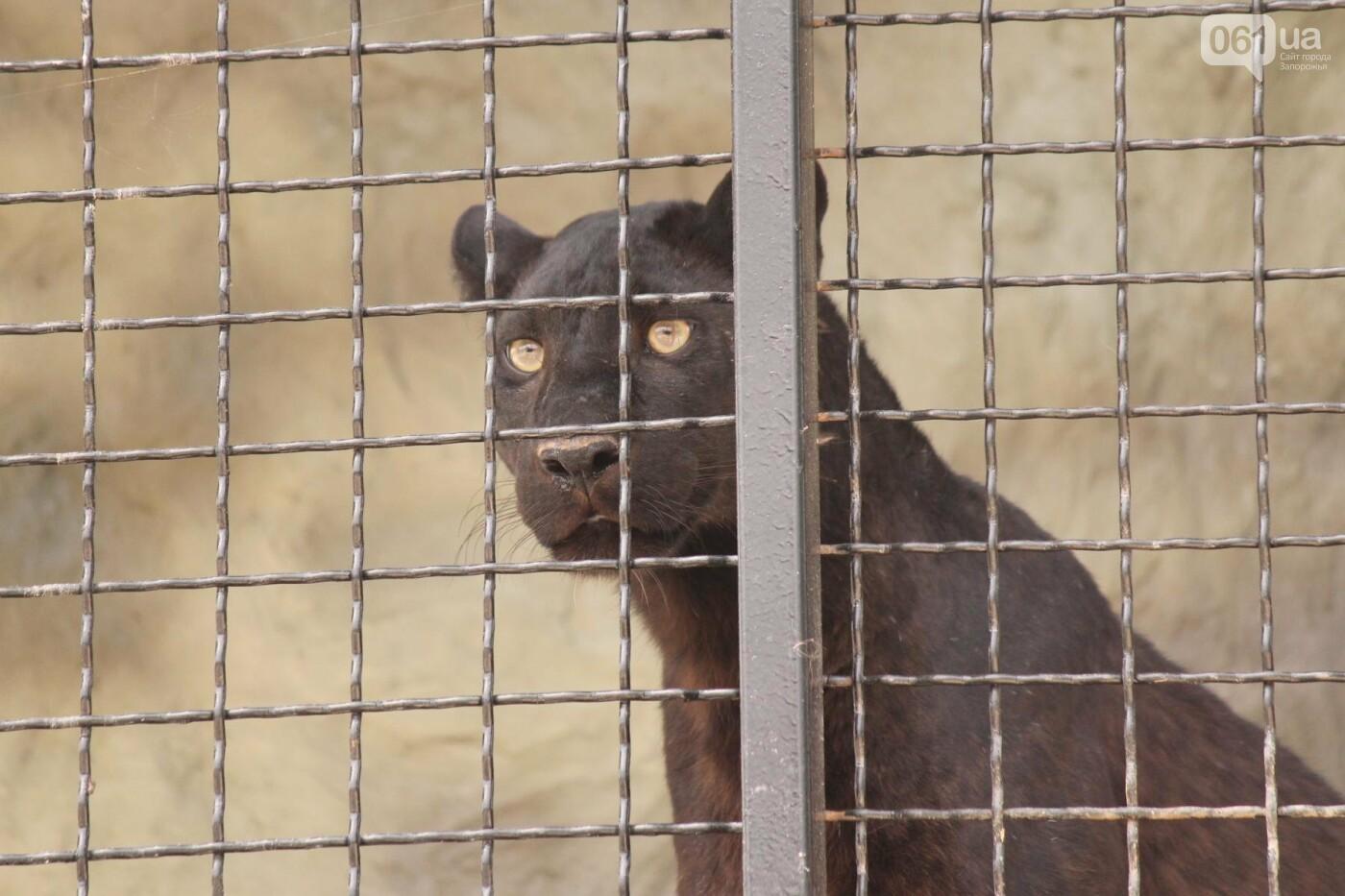 В доме с хищниками: как Александр Пылышенко прожил 36 дней с львицей и построил в Васильевке уникальный зоопарк, фото-24