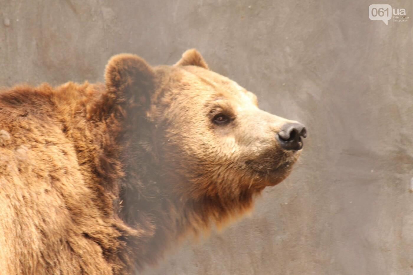 В доме с хищниками: как Александр Пылышенко прожил 36 дней с львицей и построил в Васильевке уникальный зоопарк, фото-16