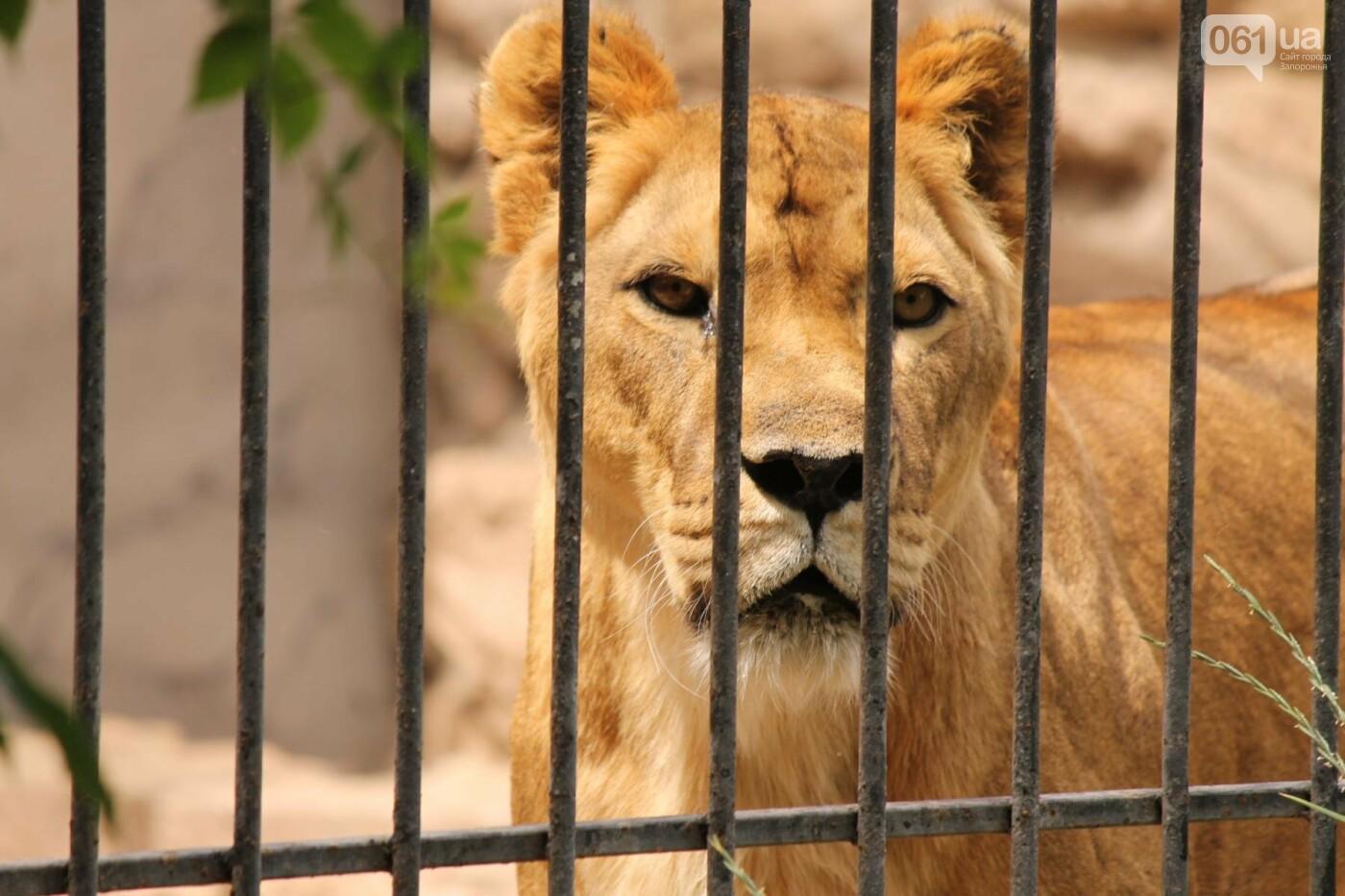 В доме с хищниками: как Александр Пылышенко прожил 36 дней с львицей и построил в Васильевке уникальный зоопарк, фото-19