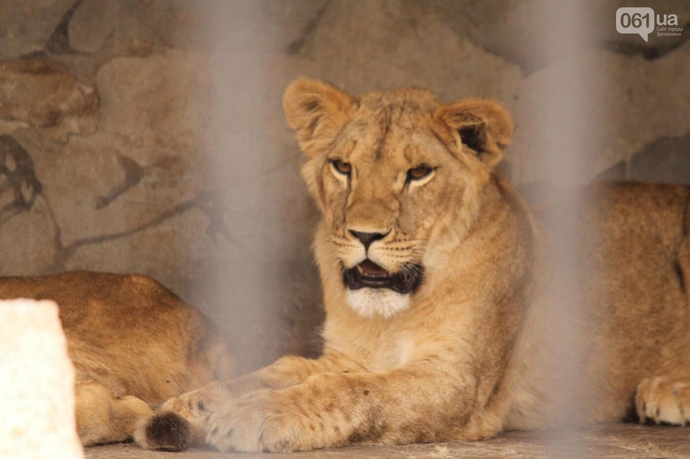 В доме с хищниками: как Александр Пылышенко прожил 36 дней с львицей и построил в Васильевке уникальный зоопарк, фото-22