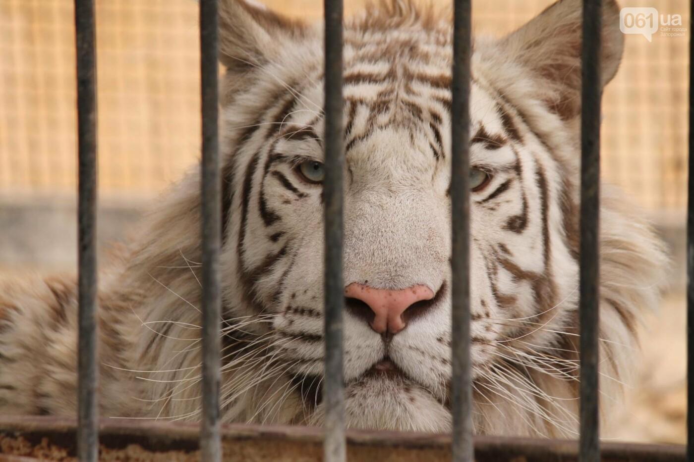 В доме с хищниками: как Александр Пылышенко прожил 36 дней с львицей и построил в Васильевке уникальный зоопарк, фото-23