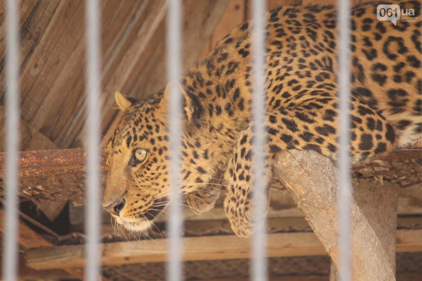 В доме с хищниками: как Александр Пылышенко прожил 36 дней с львицей и построил в Васильевке уникальный зоопарк, фото-27