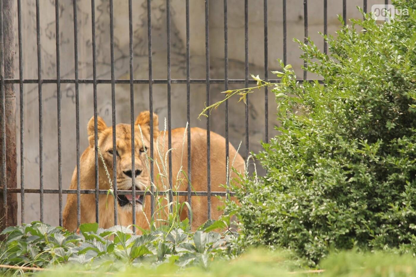 В доме с хищниками: как Александр Пылышенко прожил 36 дней с львицей и построил в Васильевке уникальный зоопарк, фото-9