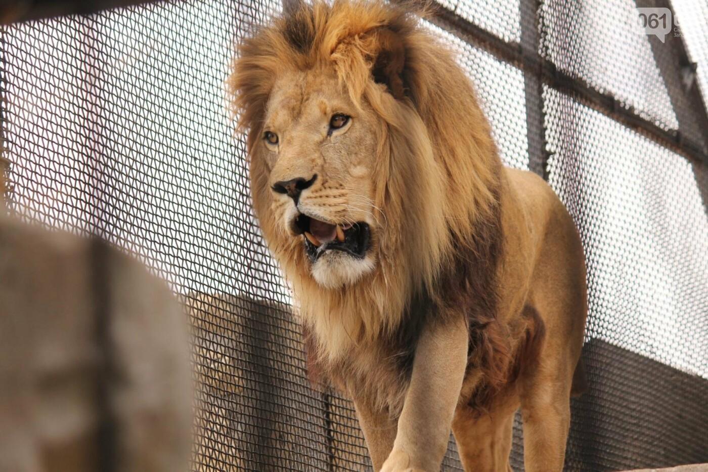 В доме с хищниками: как Александр Пылышенко прожил 36 дней с львицей и построил в Васильевке уникальный зоопарк, фото-28
