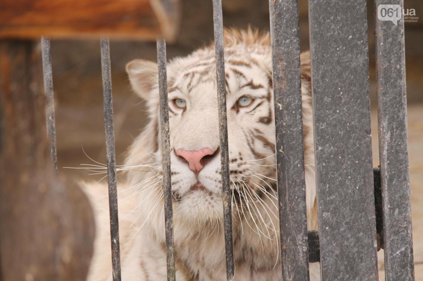 В доме с хищниками: как Александр Пылышенко прожил 36 дней с львицей и построил в Васильевке уникальный зоопарк, фото-20