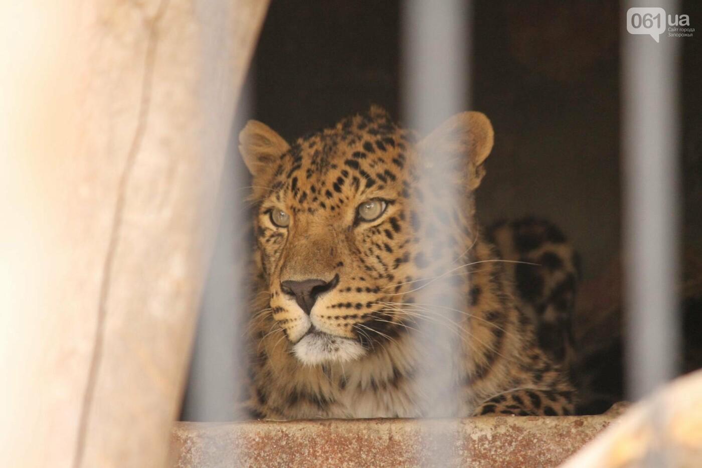 В доме с хищниками: как Александр Пылышенко прожил 36 дней с львицей и построил в Васильевке уникальный зоопарк, фото-17