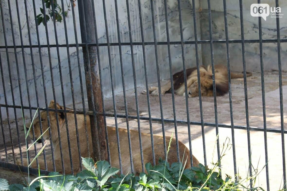 В доме с хищниками: как Александр Пылышенко прожил 36 дней с львицей и построил в Васильевке уникальный зоопарк, фото-10